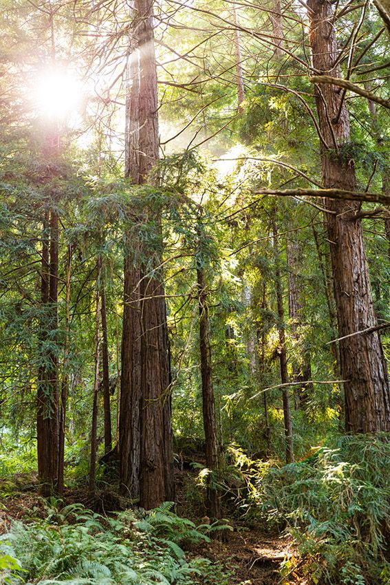 As of August 2019, there were 34.9 million acres of FSC-certified forest in the United States alone.